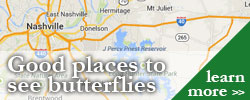 Places to see butterflies in TN